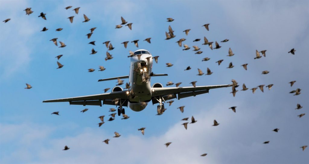 birds flying in front of airplane in flight